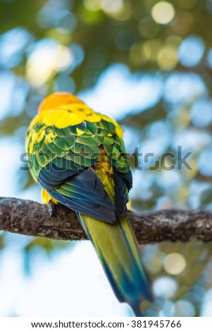Back of colorful parrot to focus at the feathers