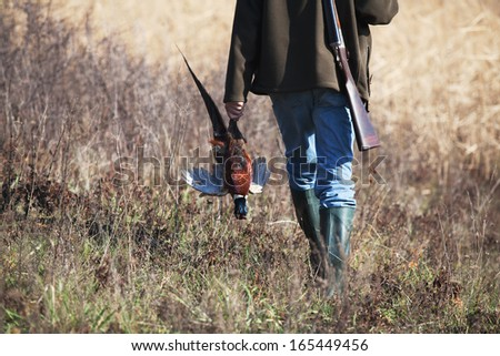 Back of going hunter with killed pheasant in hunter? hand  - stock photo