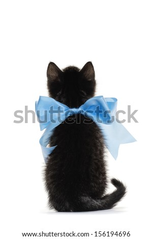 Back of little kitten with a bow on a white background - stock photo