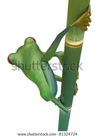 Back view of Red eyed treefrog on bamboo isolated over white