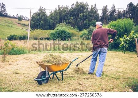 Back view of senior man raking hay with pitchfork and wheelbarrow on a field - stock photo