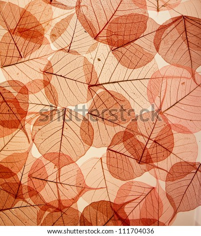 backdrop of colorful floral leaves - stock photo