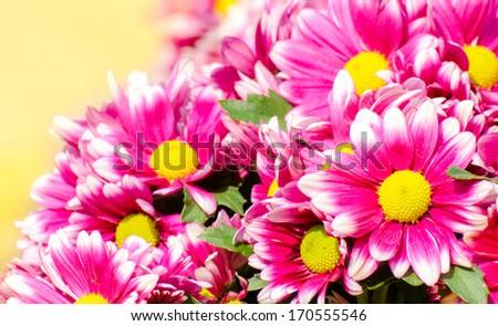 background beautiful of bright flowers - stock photo
