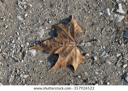Background constist of various autumn leaves