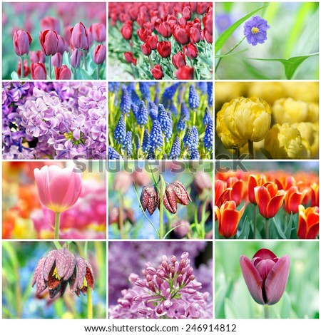 background filled with flowers ; a collection of images with a variation of different sorts of flowers  - stock photo