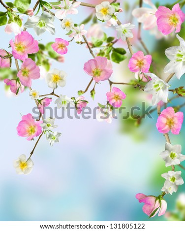 Background flowers - stock photo