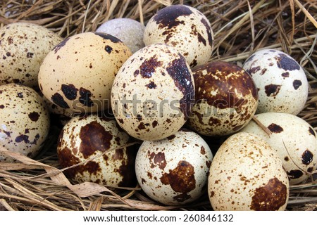 Background for Easter quail eggs in the manger