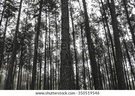 Background Forest