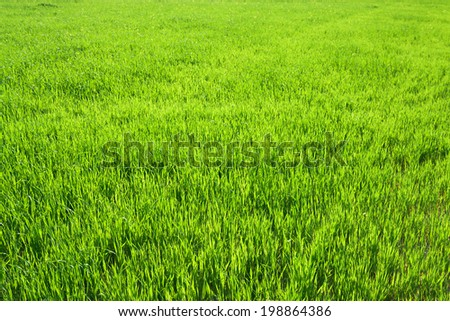 background from a green grass in the field - stock photo