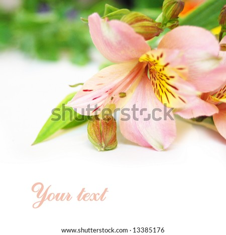 background from beautiful flower - stock photo