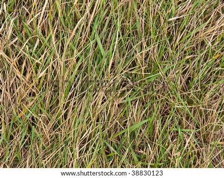 Background from beautiful green juicy length and a dry grass - stock photo