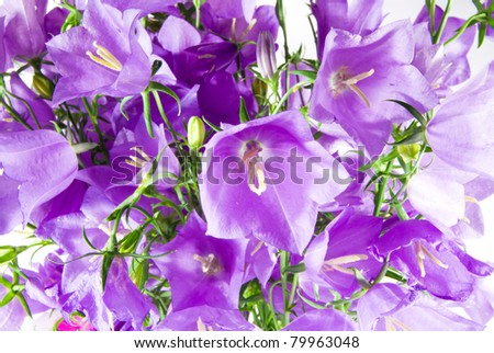 background from blue flowers campanula closeup