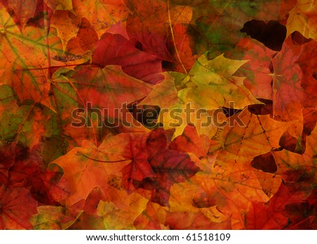 background from colored maple foliage - stock photo