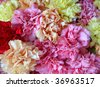 Background from different kinds of carnations - stock photo