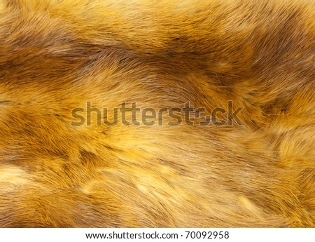 Background from fur of a red fox - stock photo