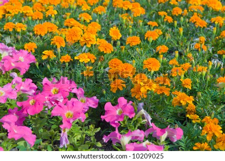 Background from garden flowers - stock photo