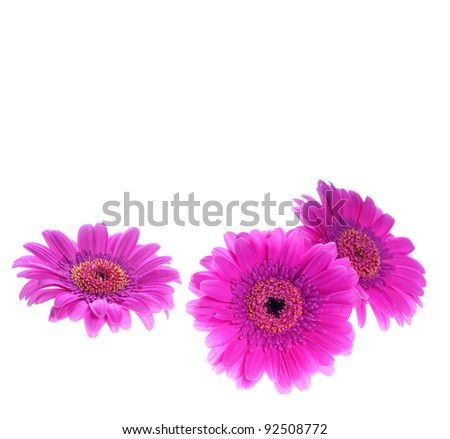 Background from Gerbera flower - stock photo