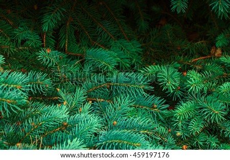 Background from green Fir tree branch. Fluffy young branch Fir tree.  - stock photo