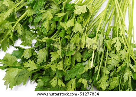 background from parsley in drops of water on white background