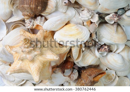Background from scattered white and beige sea cockleshells. - stock photo