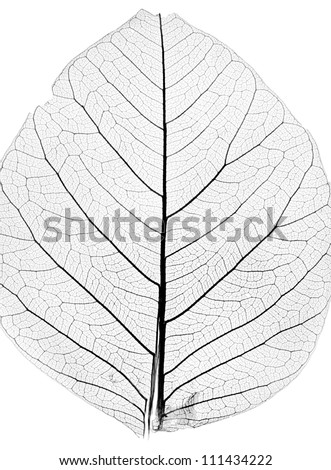 background from tree leaf close up - stock photo