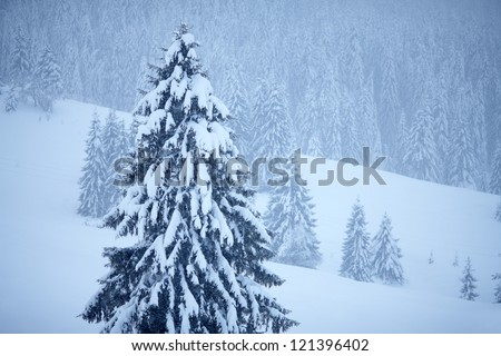 Background from winter trees. Natural winter landscape - stock photo