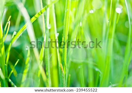 Background grass with drops - stock photo