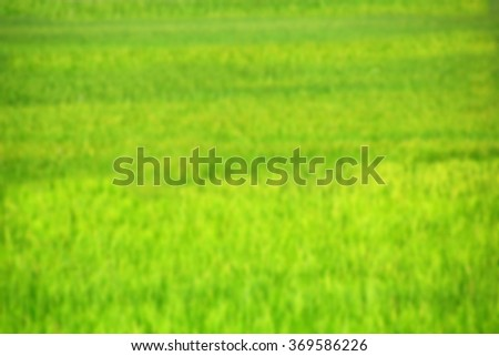 Background green grass  - stock photo
