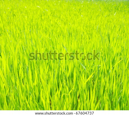 background green lawn