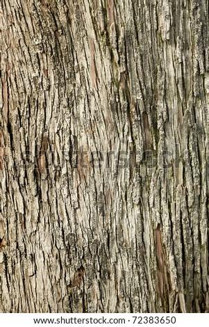 Background image od tree bark - stock photo