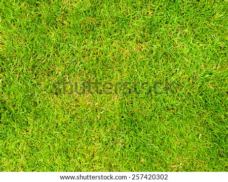 Background image of a lush grass field - stock photo