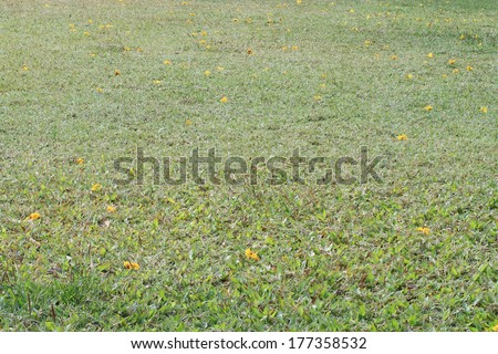 Background image of lush grass field - stock photo