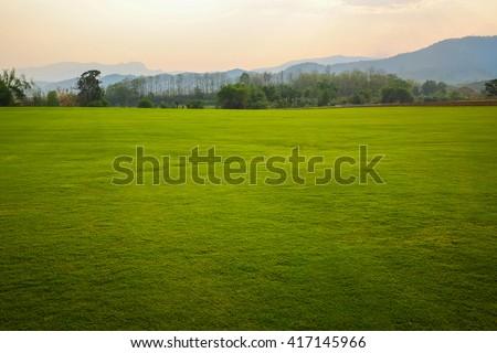 Background image of lush grass field - stock photo