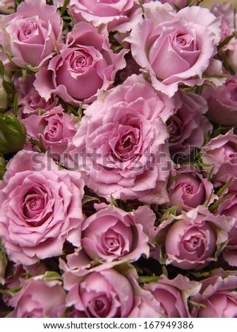 Background image of pink roses - stock photo