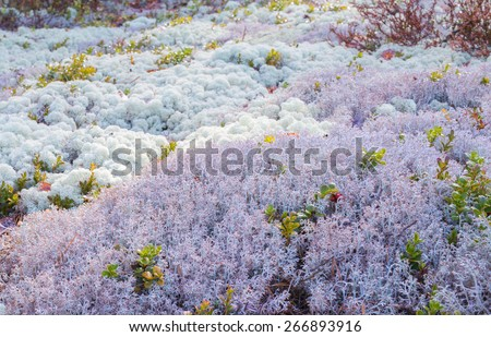 background landscape of lichen and moss - stock photo
