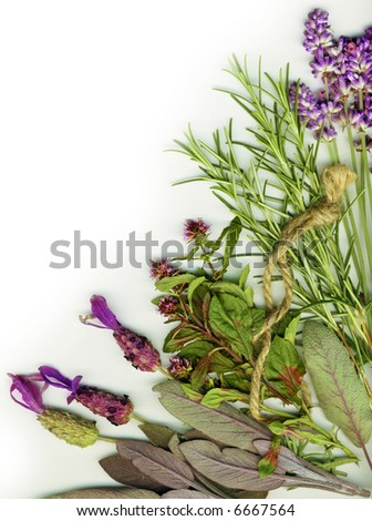 Background made from healing herbs - stock photo