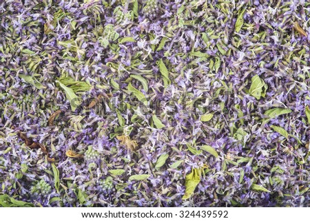 Background made of dried pennyroyal flowers  - stock photo