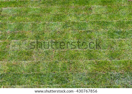 background made of lawn rolls - top view