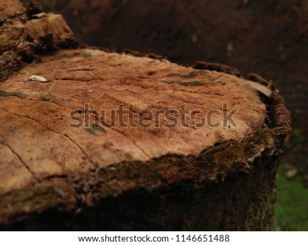 stock-photo-background-natural-wood-1146