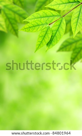 Background Nature green leaves