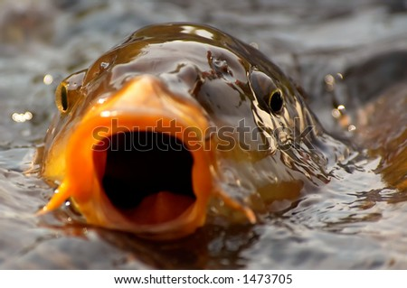 Background of a fish ready to take a bite out of the camera