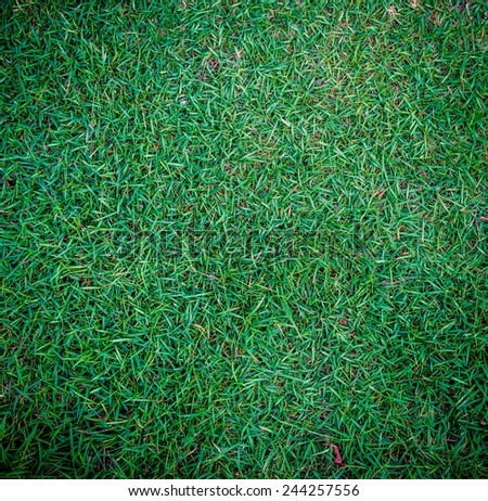 Background of a green grass.For inserting text or creative website.