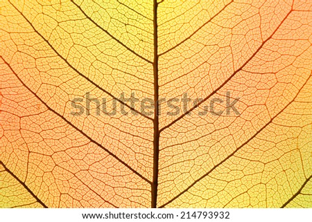Background of Autumn colors Leaf cell structure - macro shot, natural texture