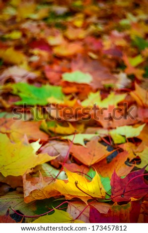 Background Of Autumn Fall Leaves With Shallow DoF - stock photo