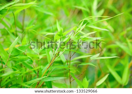 background of bamboo branch - stock photo