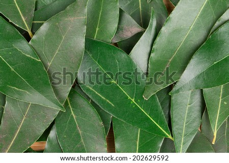 Background of bay leaves. Close up. Whole background.