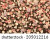 Background of Beautiful flower wedding decoration, Process with filter - stock photo