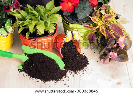 Background of beautiful garden flowers on a wooden board