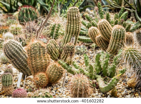 Background of beautiful various cacti. Gardening theme. Flower shop.