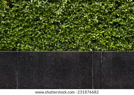 Background of black granite stone bench in front of hedgerow: This seat is set up at the swimming pool at condominum - stock photo